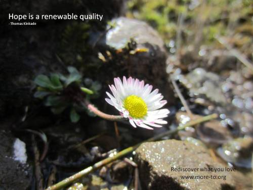 Daisy - hope is renewable quote