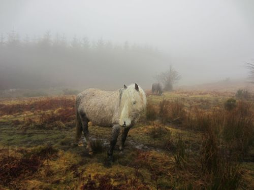 Navigating mountain ponies in cloud ..