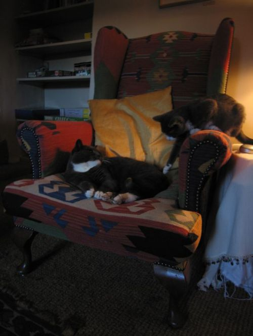 Bertie Cats share and armchair