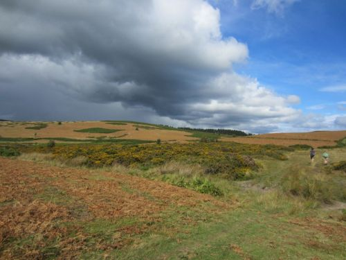 Bracken and Gorse near Kington