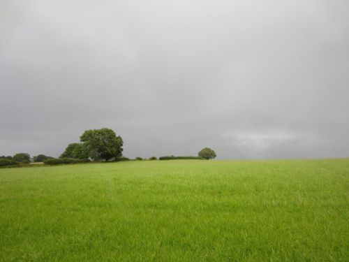 Rainy field, Offa's Dyke Knighton